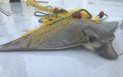 Cyprus Bycatch Project Phase I