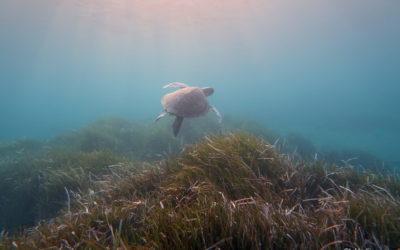 Interreg MED – POSBEMED2: Τι είναι τα γνωστά «φύτζια» που συναντάμε κατά διαστήματα στις παραλίες;