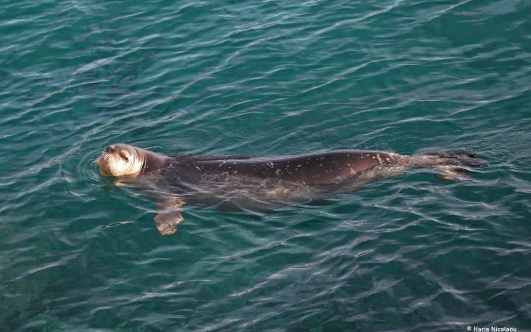 Monk seal conservation in the Eastern Mediterranean