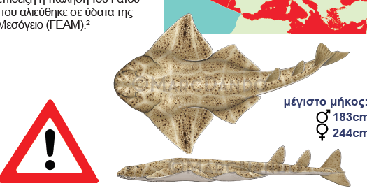 Commercial Fisheries Elasmobranch Advisories